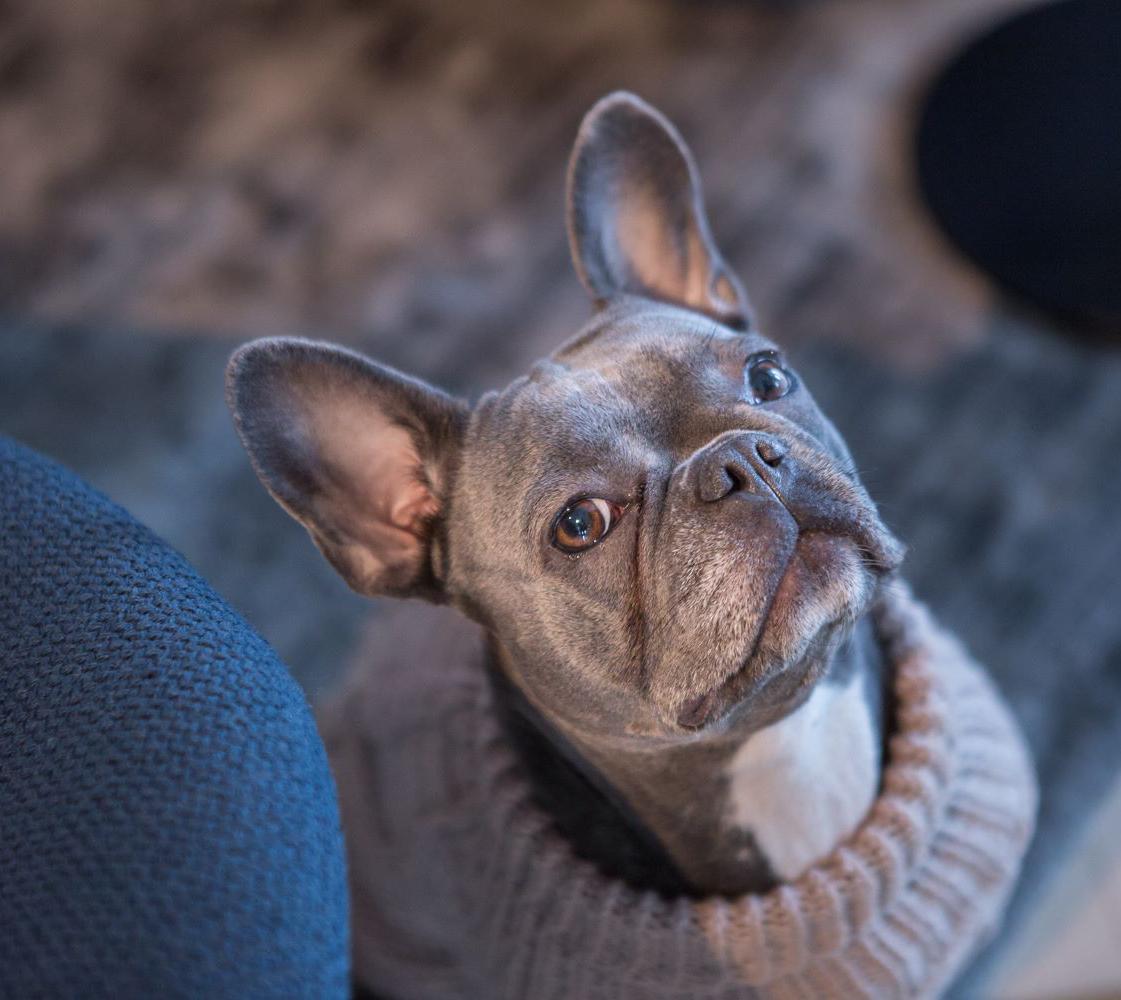 Wooldog French Bulldog Dog Sweater